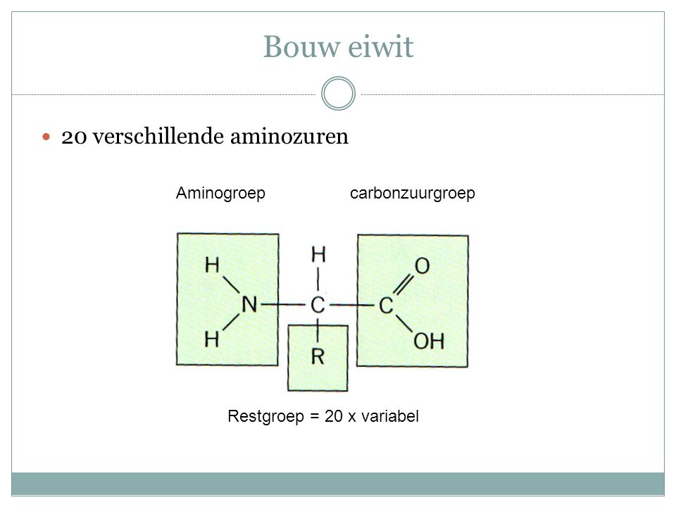 Bouw eiwit 20 verschillende aminozuren Aminogroep carbonzuurgroep
