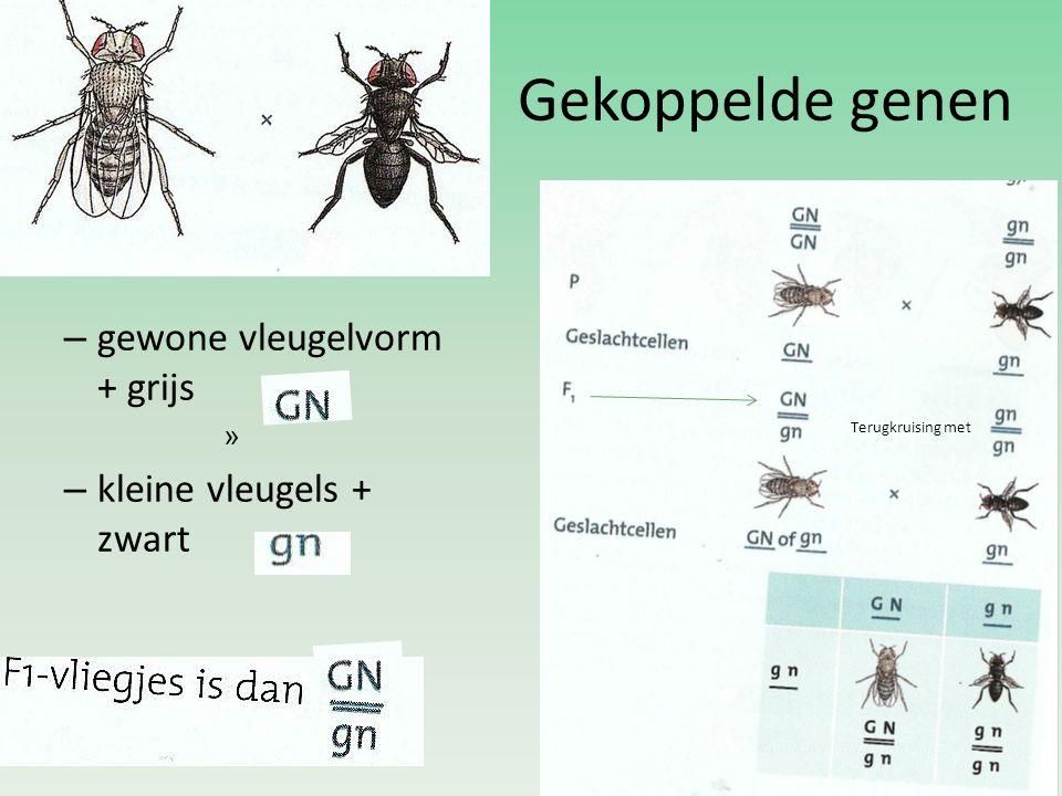 Gekoppelde genen gewone vleugelvorm + grijs kleine vleugels + zwart