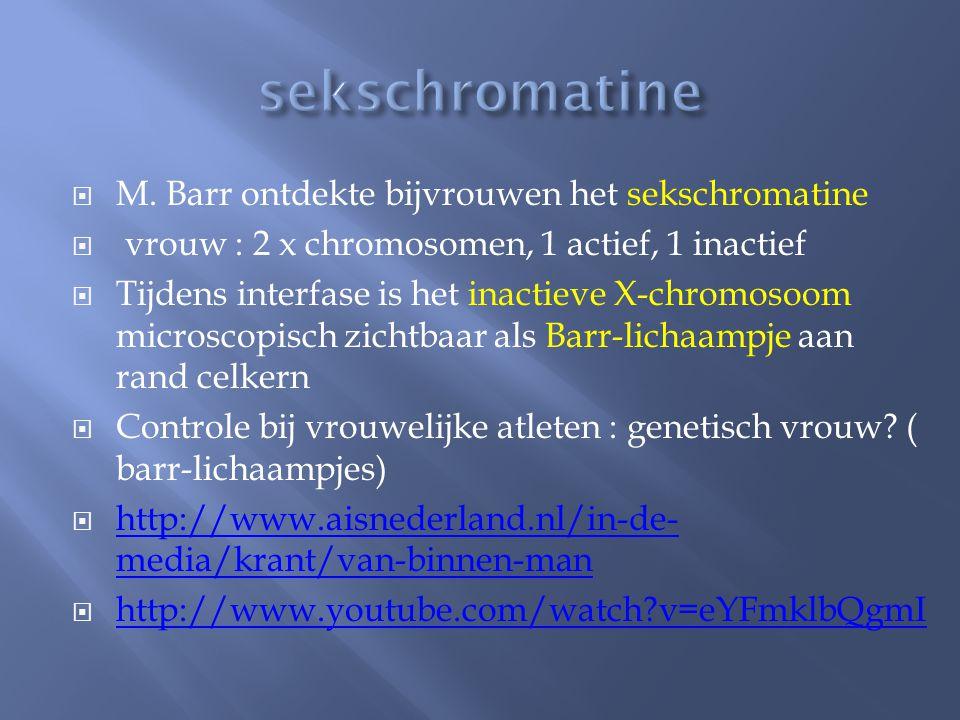 sekschromatine M. Barr ontdekte bijvrouwen het sekschromatine