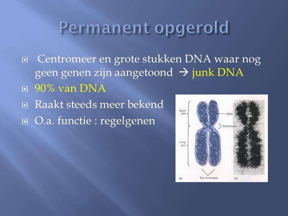 Permanent opgerold Centromeer en grote stukken DNA waar nog geen genen zijn aangetoond  junk DNA.