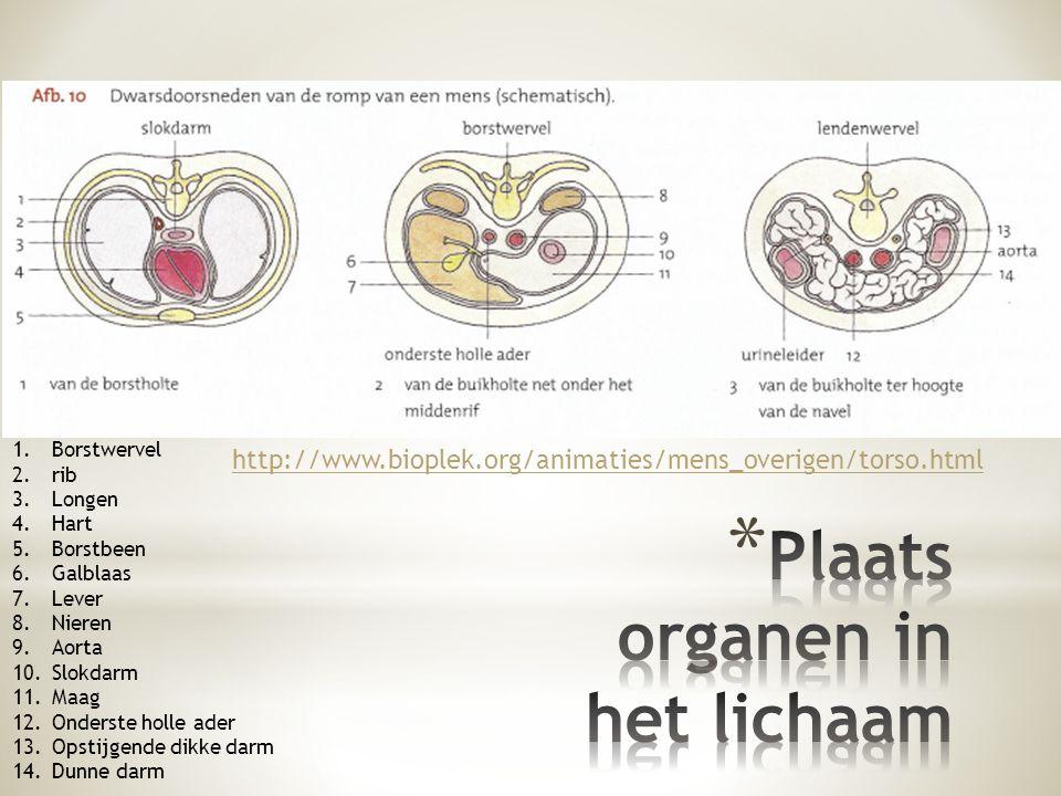 Plaats organen in het lichaam