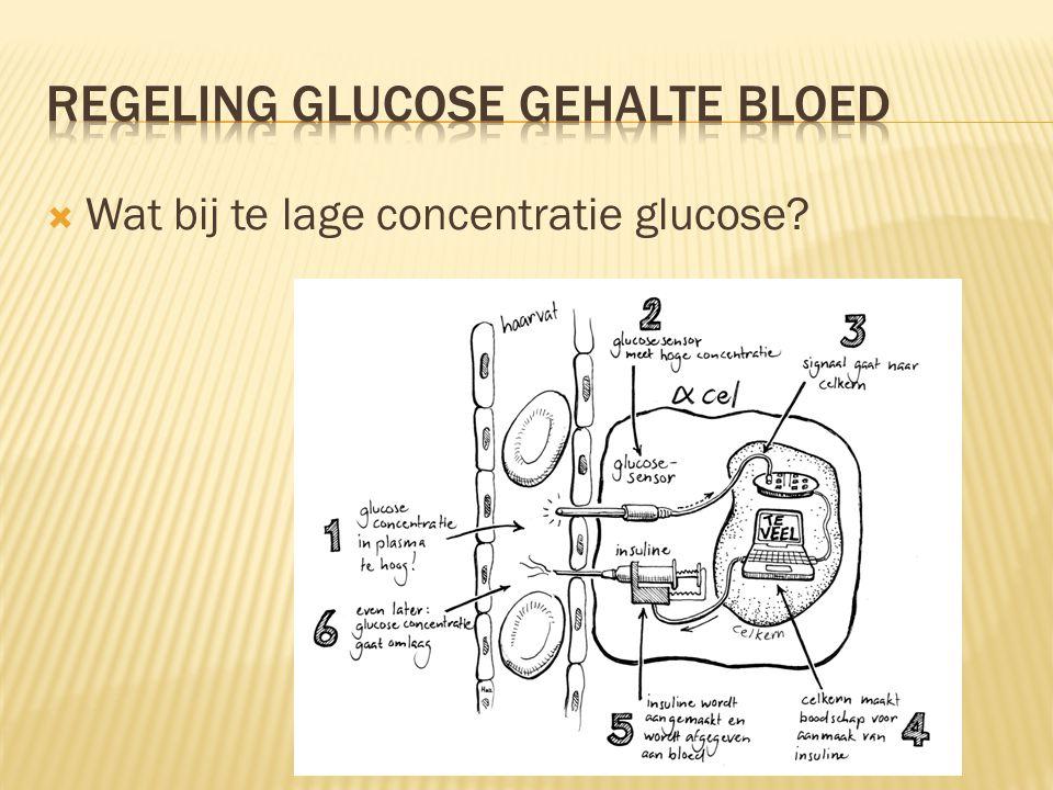 Regeling glucose gehalte bloed