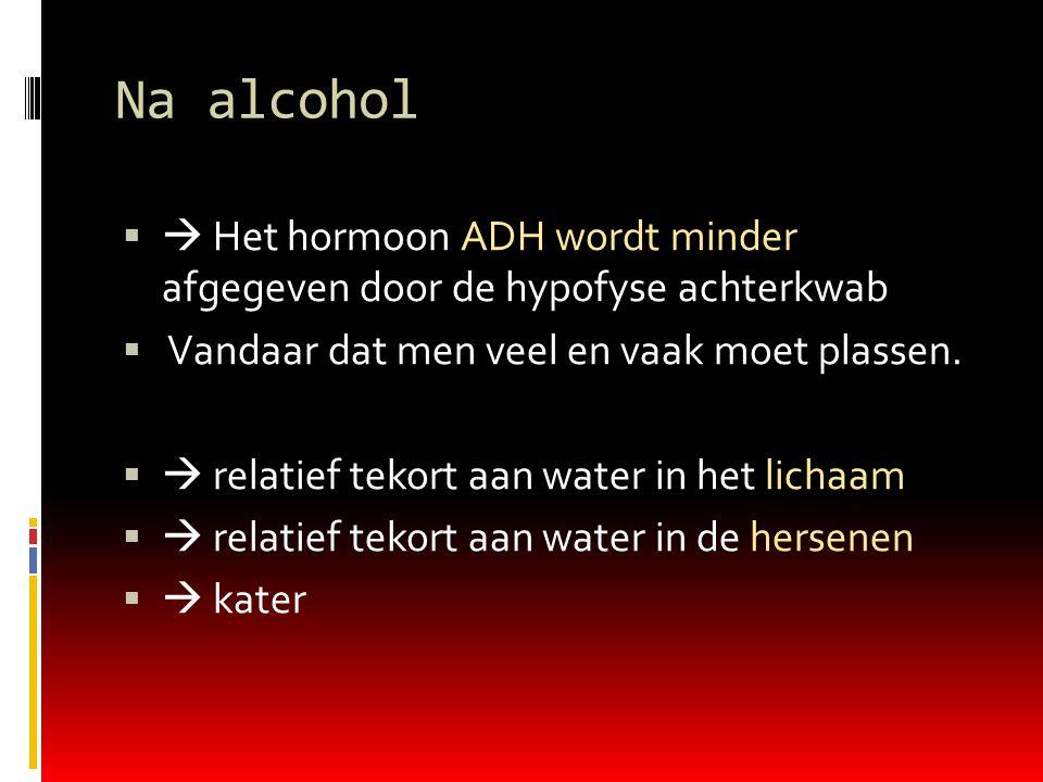 Na alcohol  Het hormoon ADH wordt minder afgegeven door de hypofyse achterkwab. Vandaar dat men veel en vaak moet plassen.