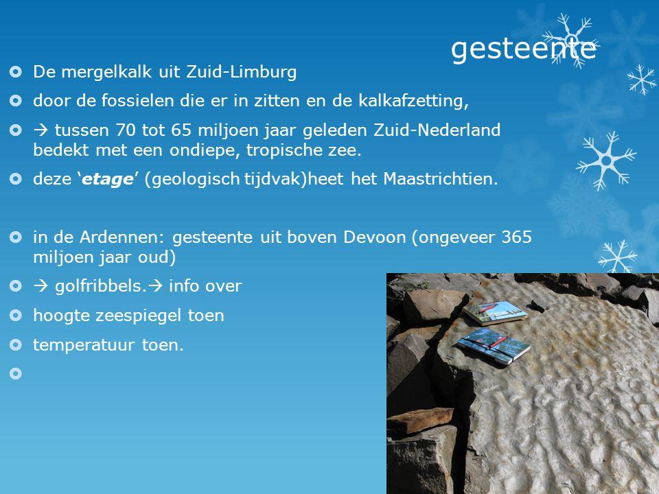 gesteente De mergelkalk uit Zuid-Limburg