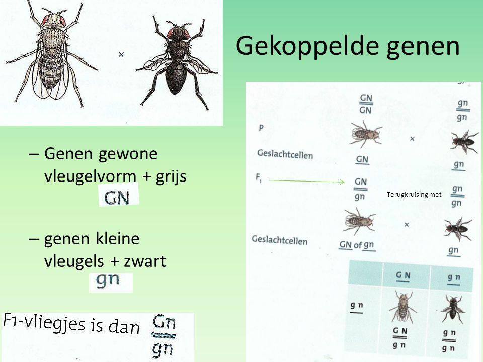 Gekoppelde genen Genen gewone vleugelvorm + grijs