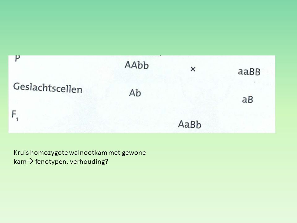 Kruis homozygote walnootkam met gewone kam fenotypen, verhouding
