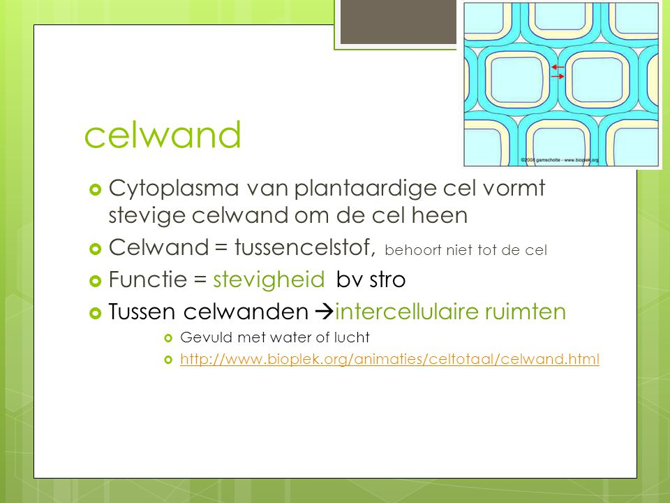 celwand Cytoplasma van plantaardige cel vormt stevige celwand om de cel heen. Celwand = tussencelstof, behoort niet tot de cel.