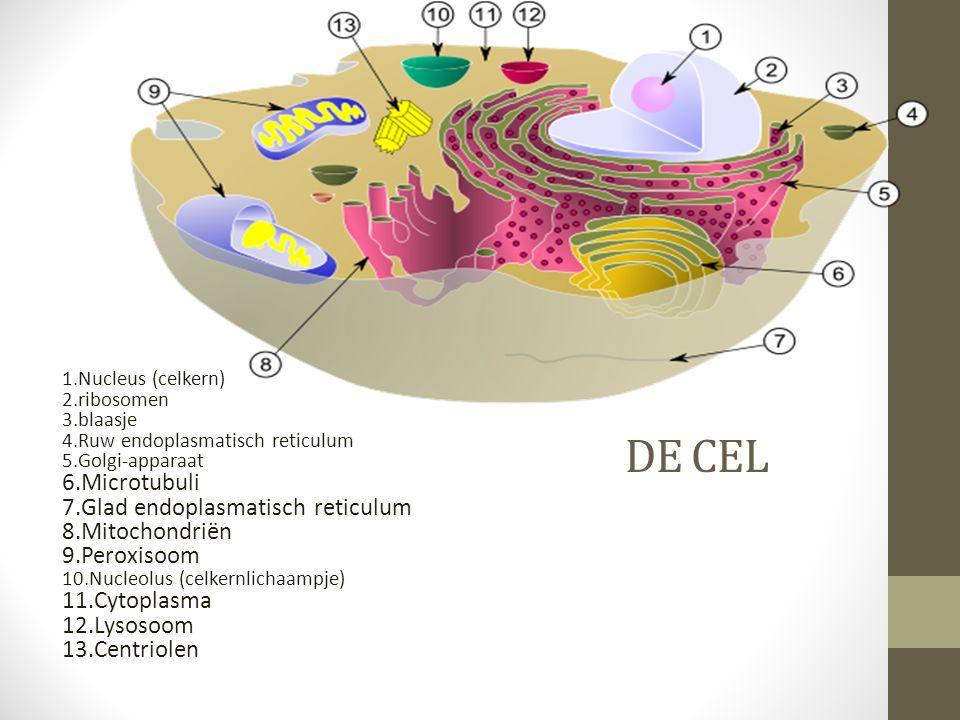 De cel Microtubuli Glad endoplasmatisch reticulum Mitochondriën