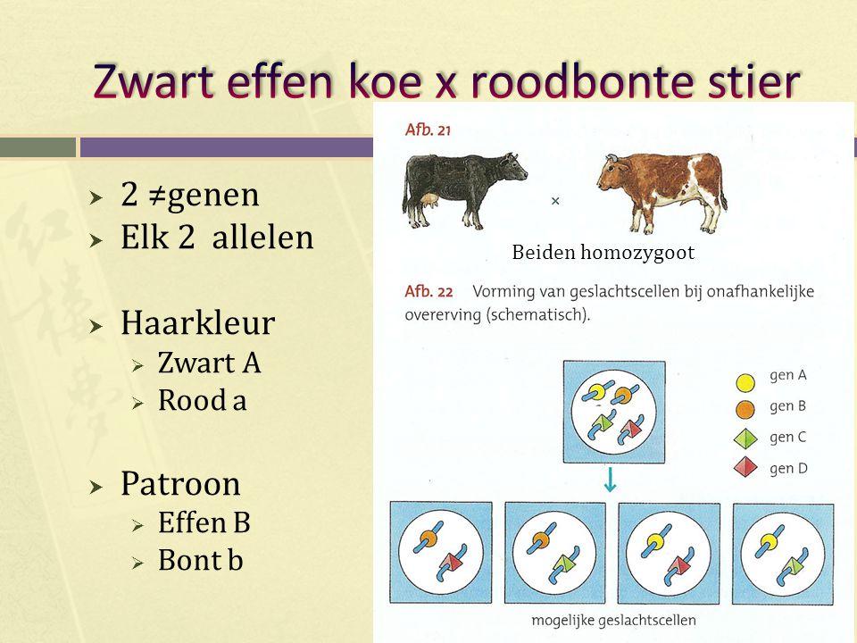 Zwart effen koe x roodbonte stier