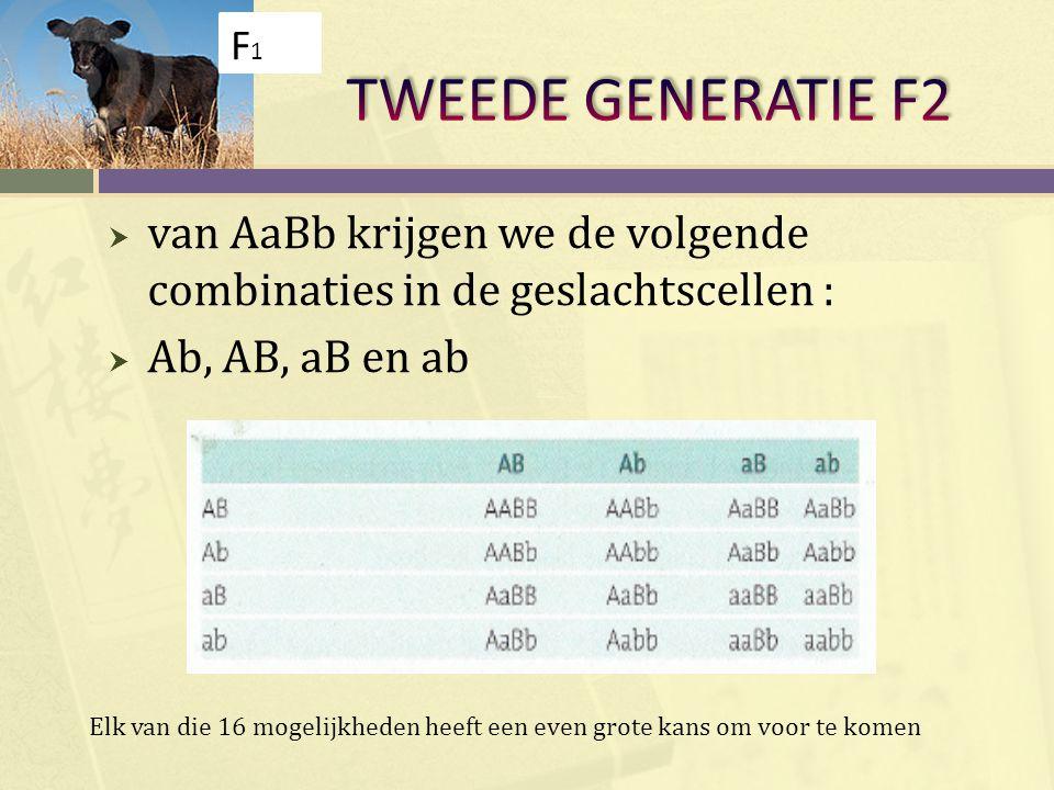 F1 TWEEDE GENERATIE F2. van AaBb krijgen we de volgende combinaties in de geslachtscellen : Ab, AB, aB en ab.