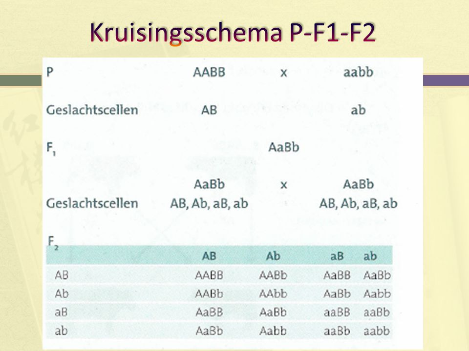 Kruisingsschema P-F1-F2