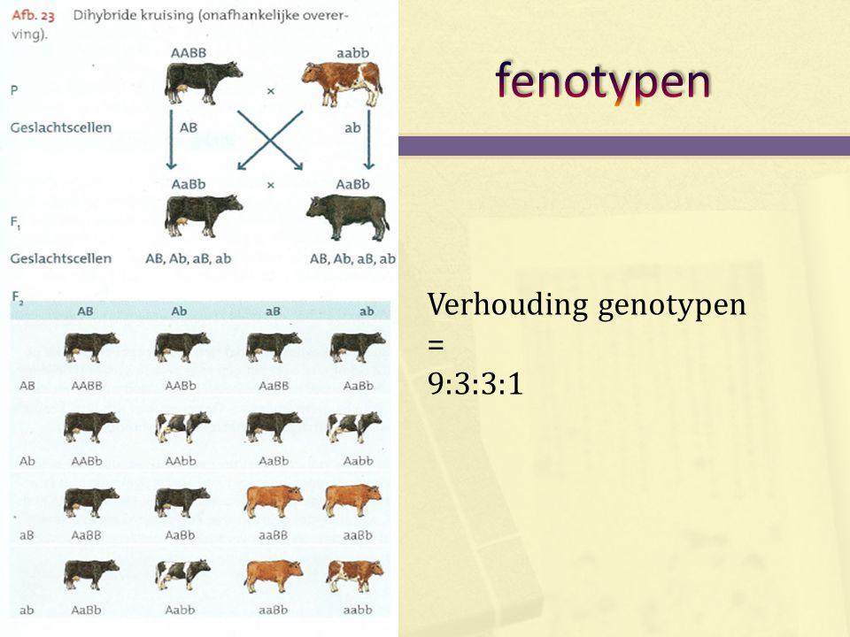 fenotypen Verhouding genotypen = 9:3:3:1