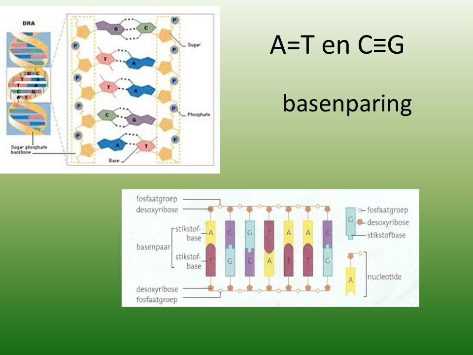 A=T en C≡G basenparing