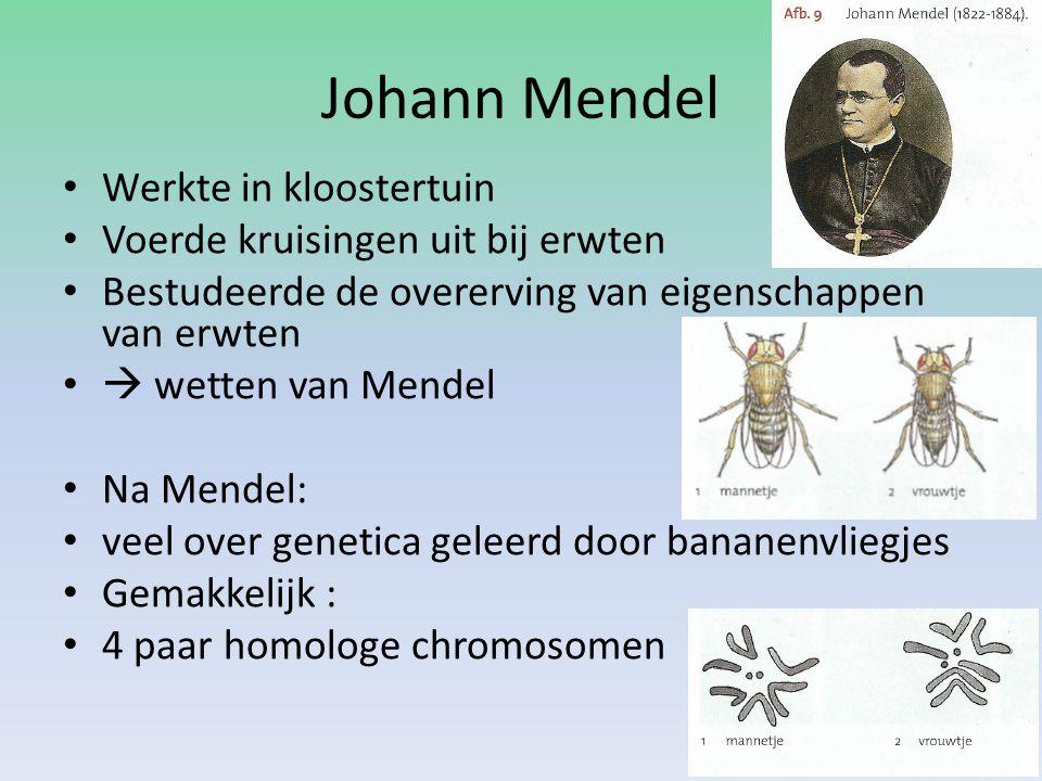 Johann Mendel Werkte in kloostertuin Voerde kruisingen uit bij erwten