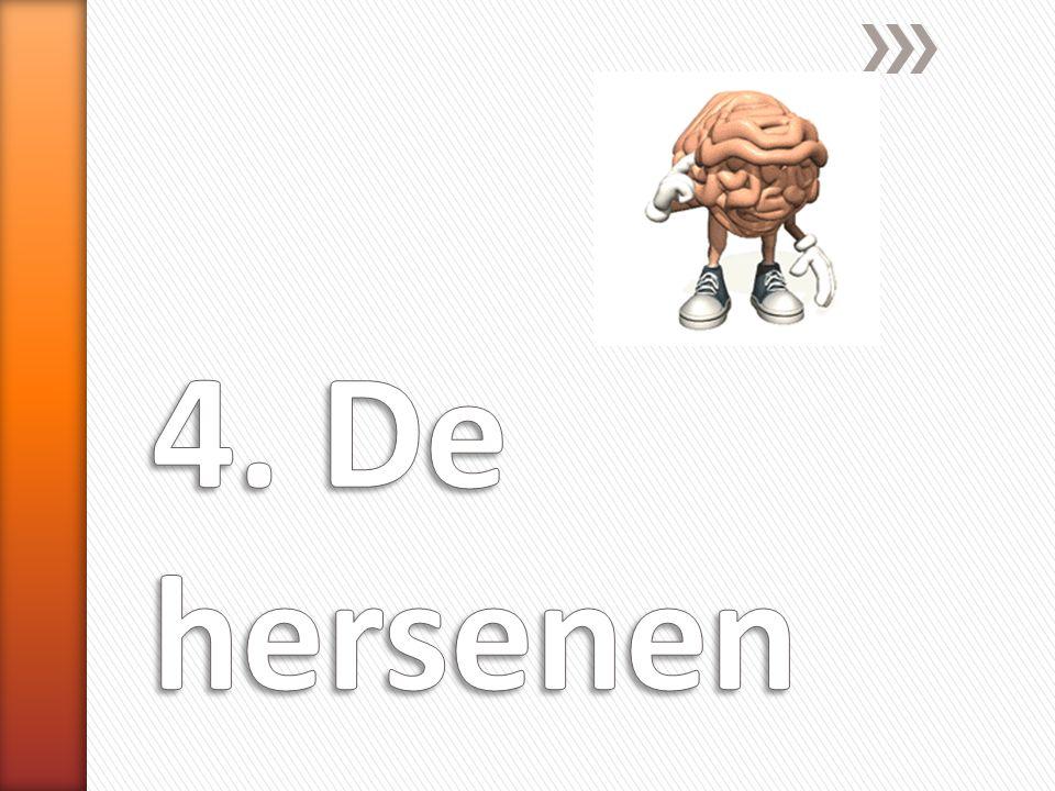 4. De hersenen