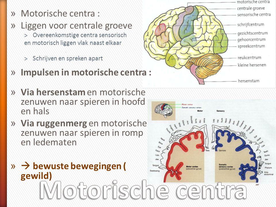 Motorische centra Motorische centra : Liggen voor centrale groeve