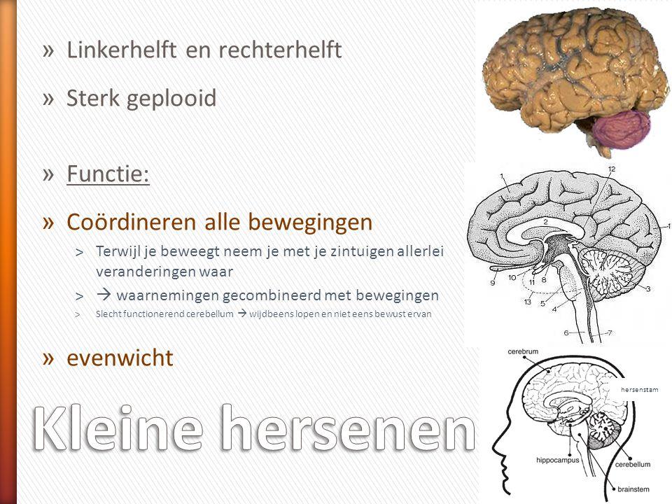 Kleine hersenen Linkerhelft en rechterhelft Sterk geplooid Functie: