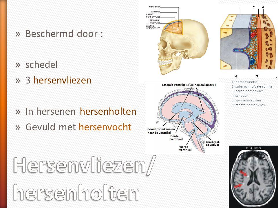 Hersenvliezen/ hersenholten