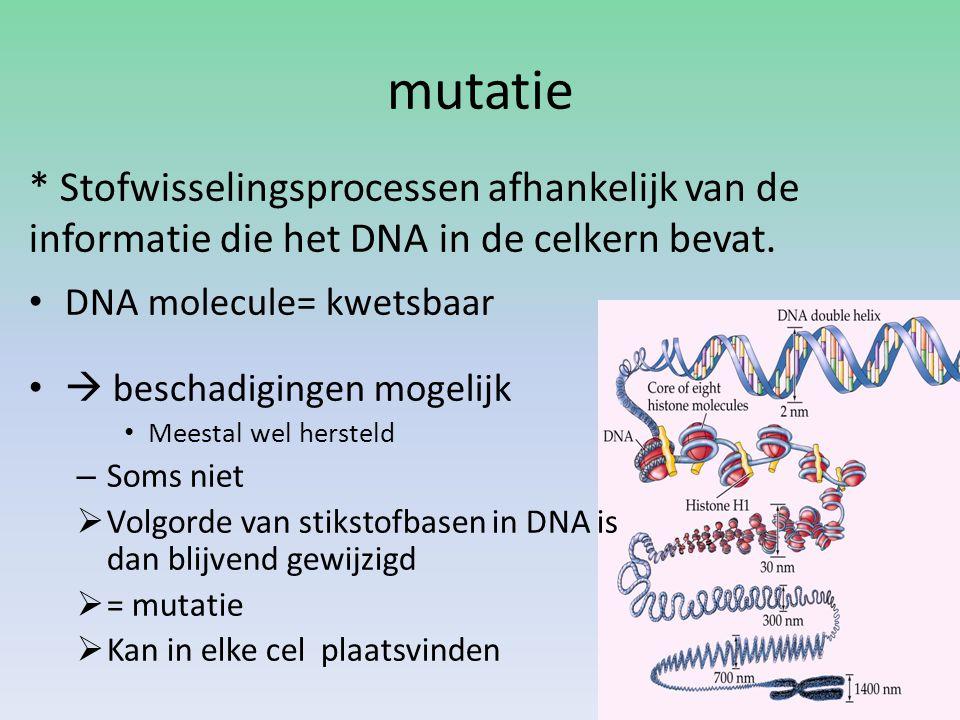 mutatie * Stofwisselingsprocessen afhankelijk van de informatie die het DNA in de celkern bevat. DNA molecule= kwetsbaar.