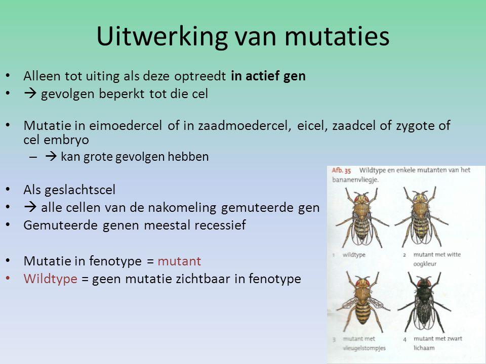 Uitwerking van mutaties