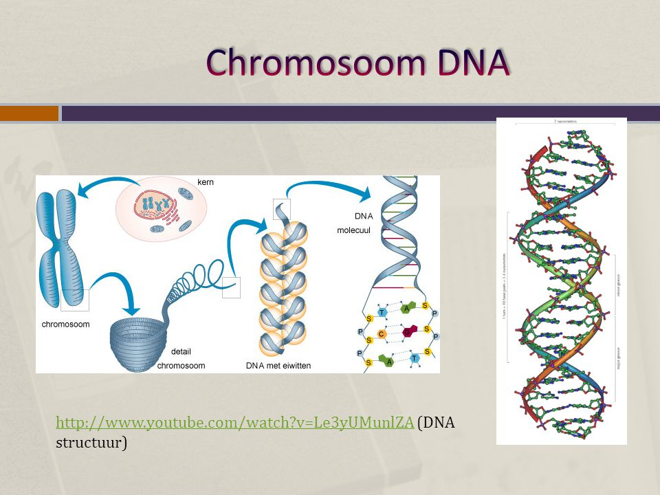 Chromosoom DNA http://www.youtube.com/watch v=Le3yUMunlZA (DNA structuur)