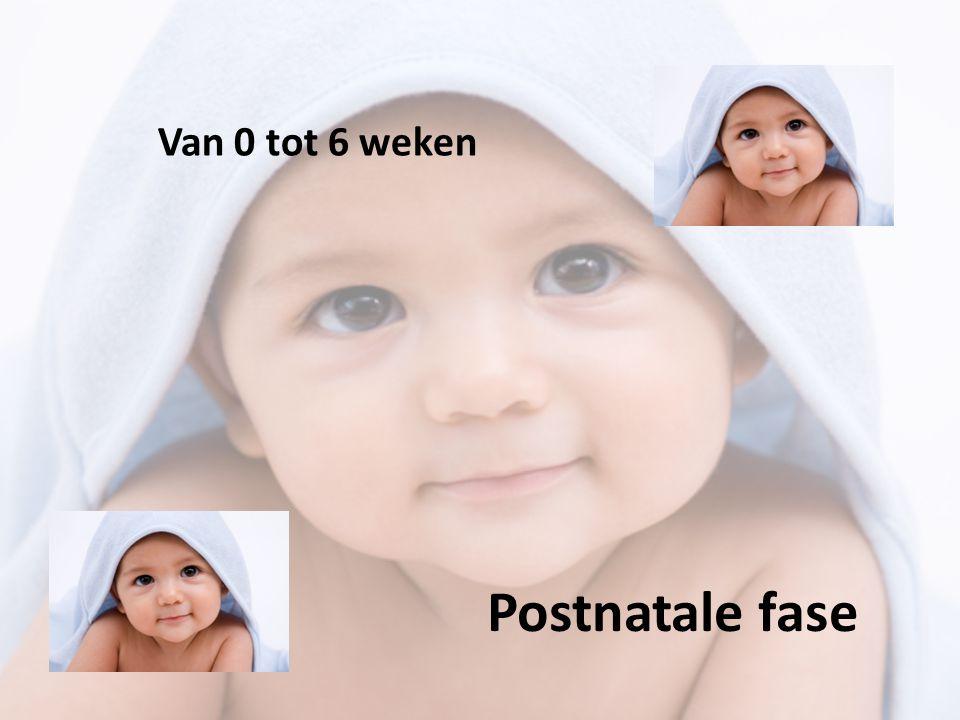 Van 0 tot 6 weken Postnatale fase