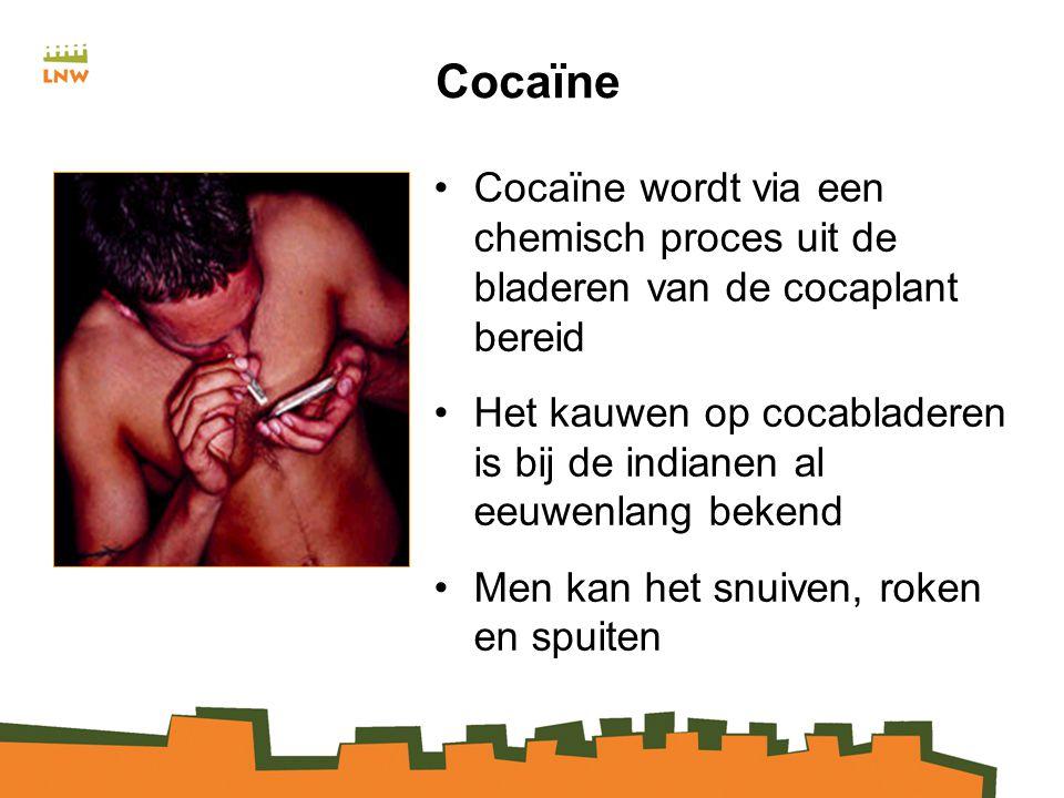 Cocaïne Cocaïne wordt via een chemisch proces uit de bladeren van de cocaplant bereid.