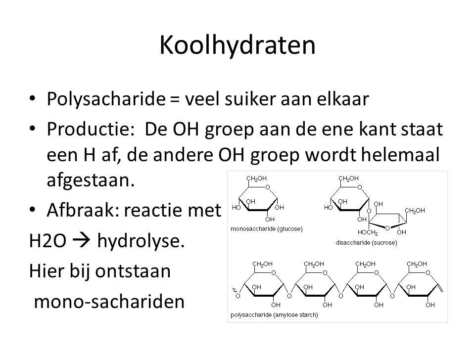 Koolhydraten Polysacharide = veel suiker aan elkaar