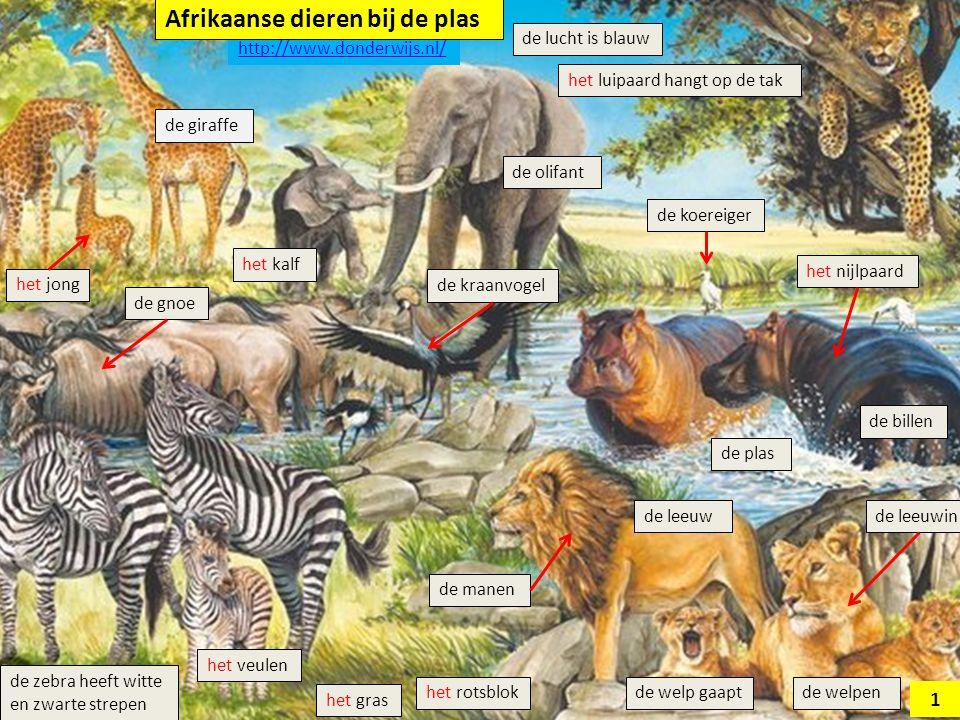 Afrikaanse dieren bij de plas