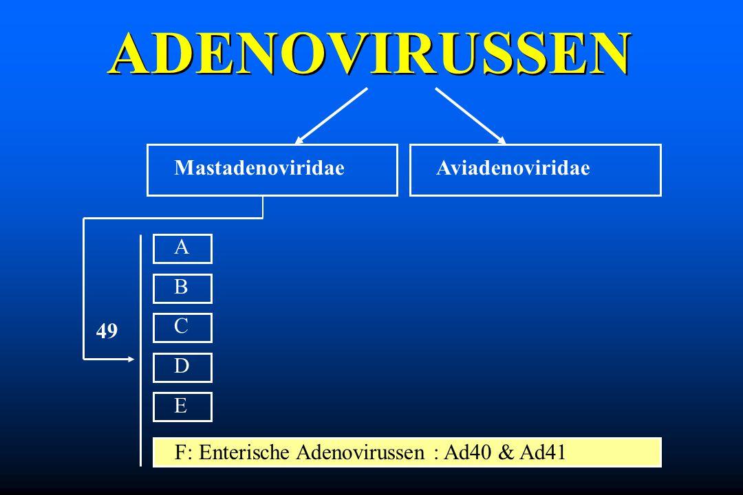 ADENOVIRUSSEN Mastadenoviridae A B C D E Aviadenoviridae 49
