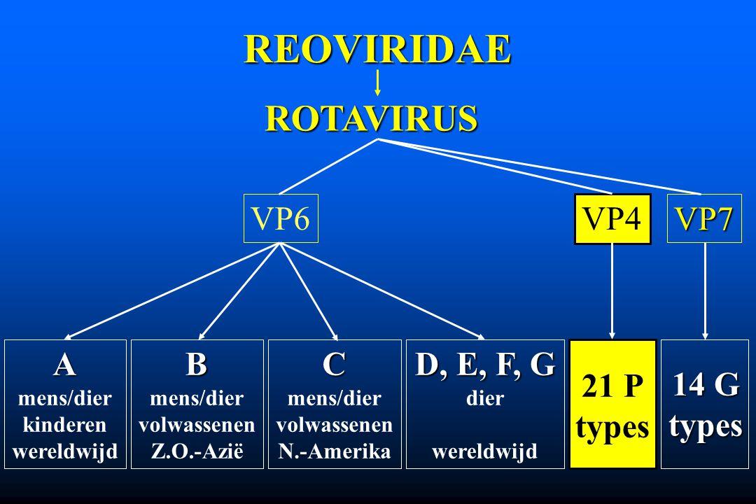 REOVIRIDAE ROTAVIRUS VP6 VP4 VP7 A B C D, E, F, G 21 P types 14 G