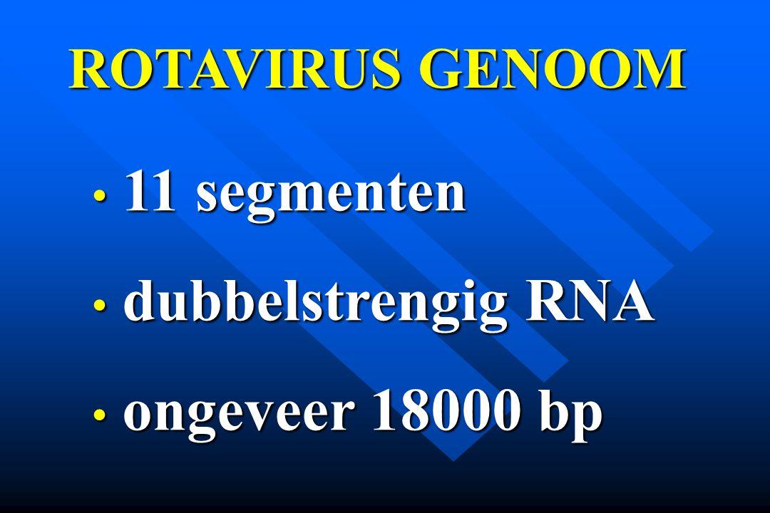ROTAVIRUS GENOOM 11 segmenten dubbelstrengig RNA ongeveer 18000 bp