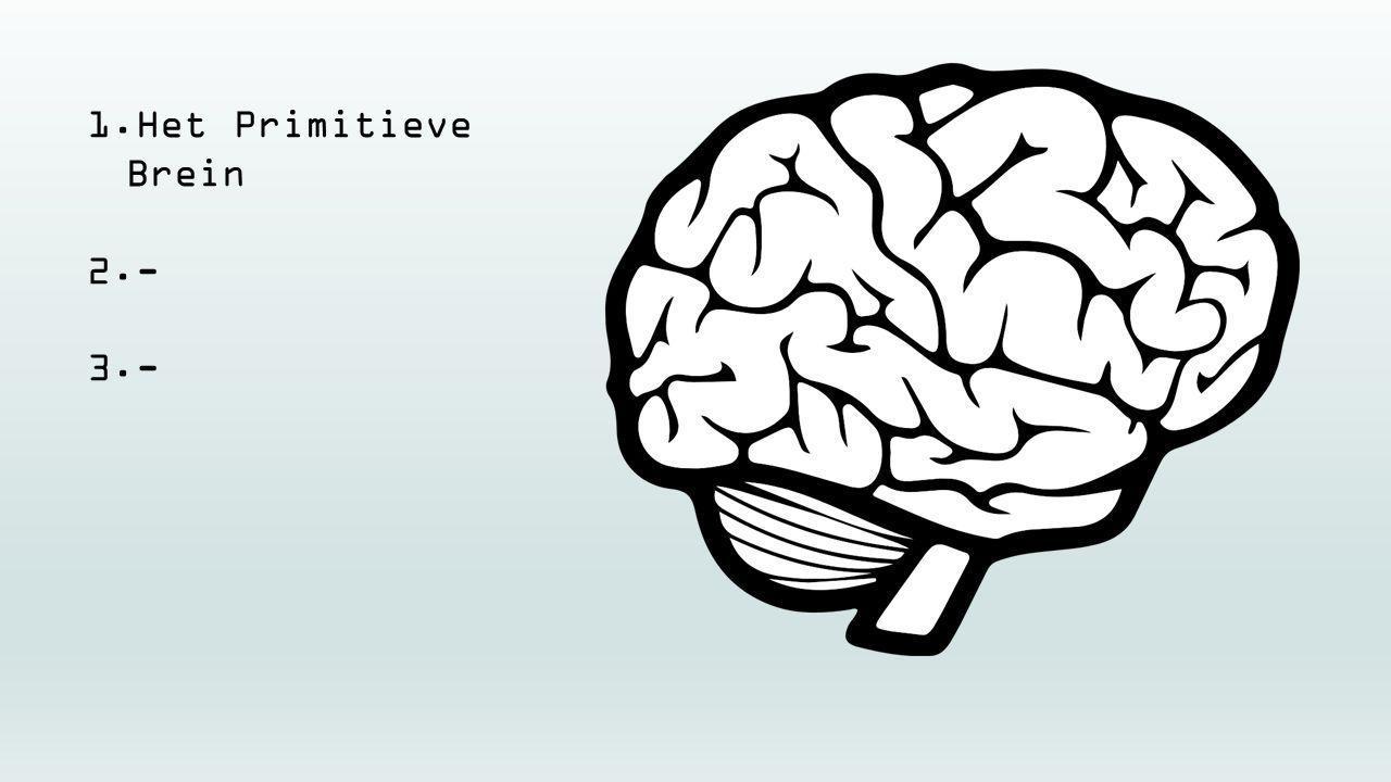 Het Primitieve Brein -