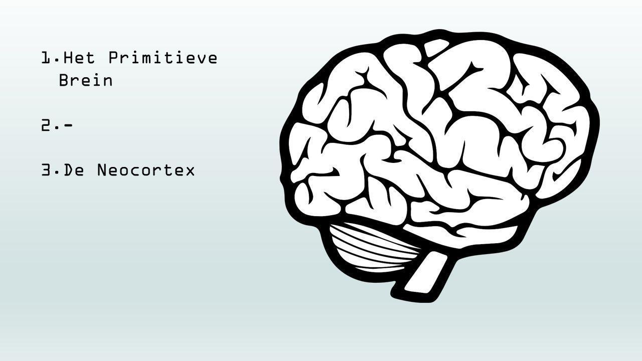 Het Primitieve Brein - De Neocortex