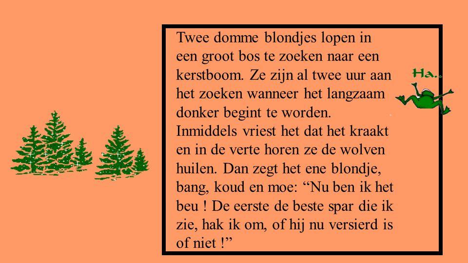 Twee domme blondjes lopen in een groot bos te zoeken naar een kerstboom.