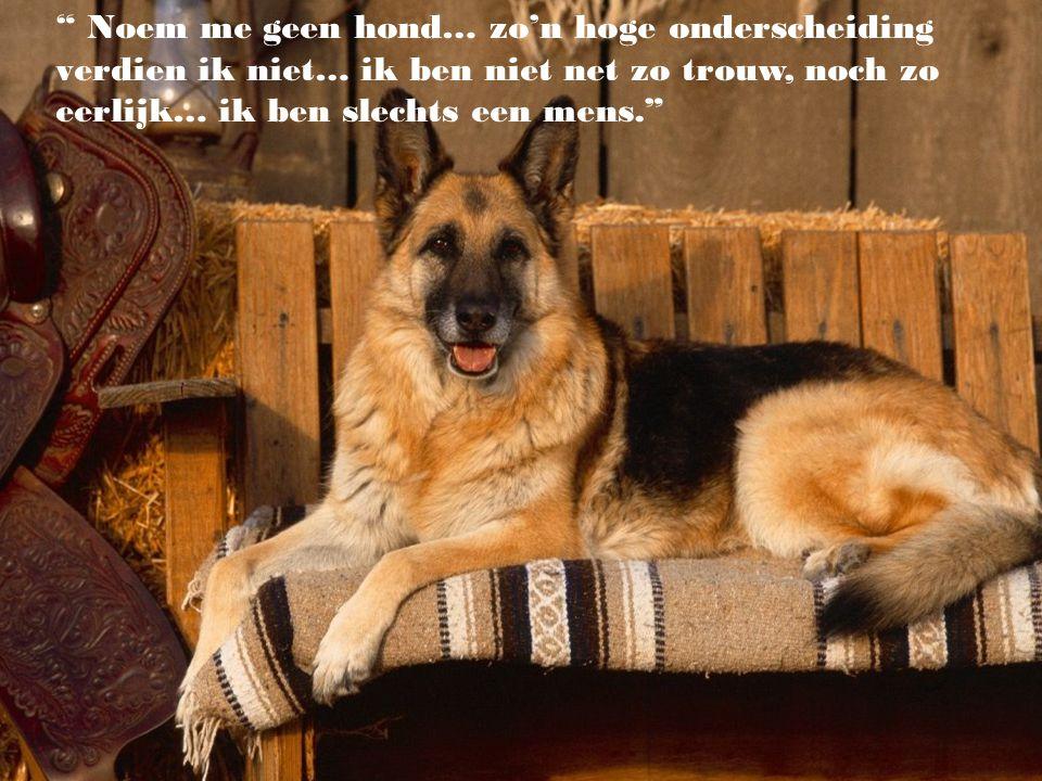 Noem me geen hond… zo'n hoge onderscheiding verdien ik niet… ik ben niet net zo trouw, noch zo eerlijk… ik ben slechts een mens.