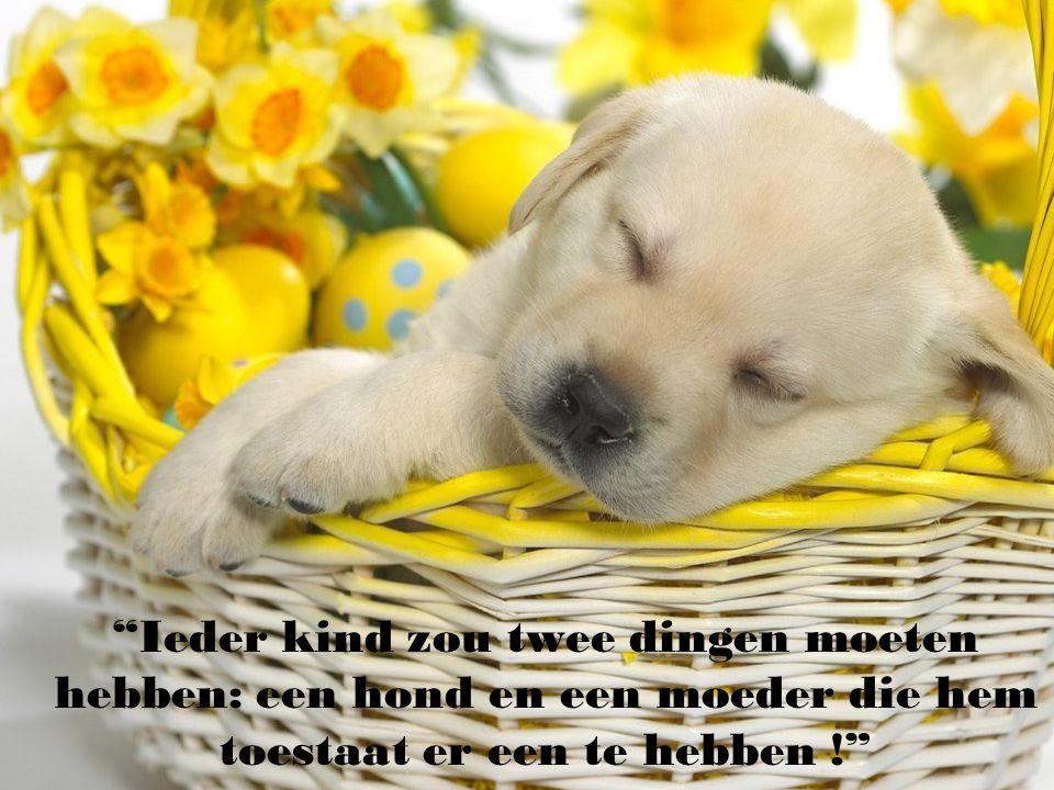 Ieder kind zou twee dingen moeten hebben: een hond en een moeder die hem toestaat er een te hebben !