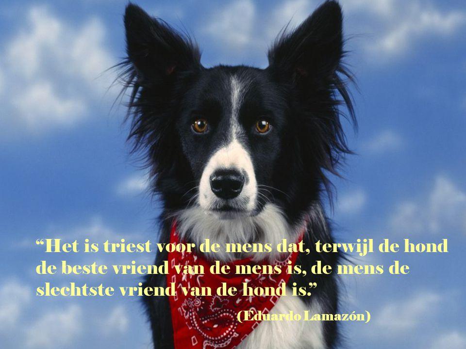 Het is triest voor de mens dat, terwijl de hond de beste vriend van de mens is, de mens de slechtste vriend van de hond is.