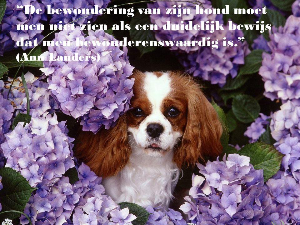 De bewondering van zijn hond moet men niet zien als een duidelijk bewijs dat men bewonderenswaardig is. (Ann Landers)