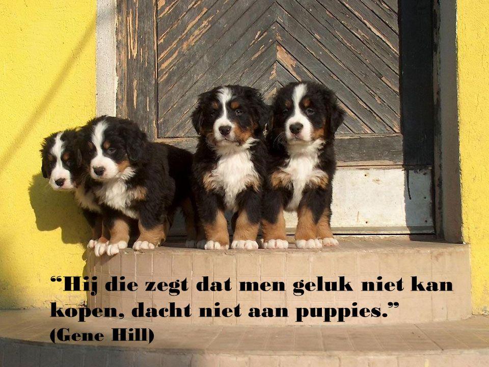 Hij die zegt dat men geluk niet kan kopen, dacht niet aan puppies