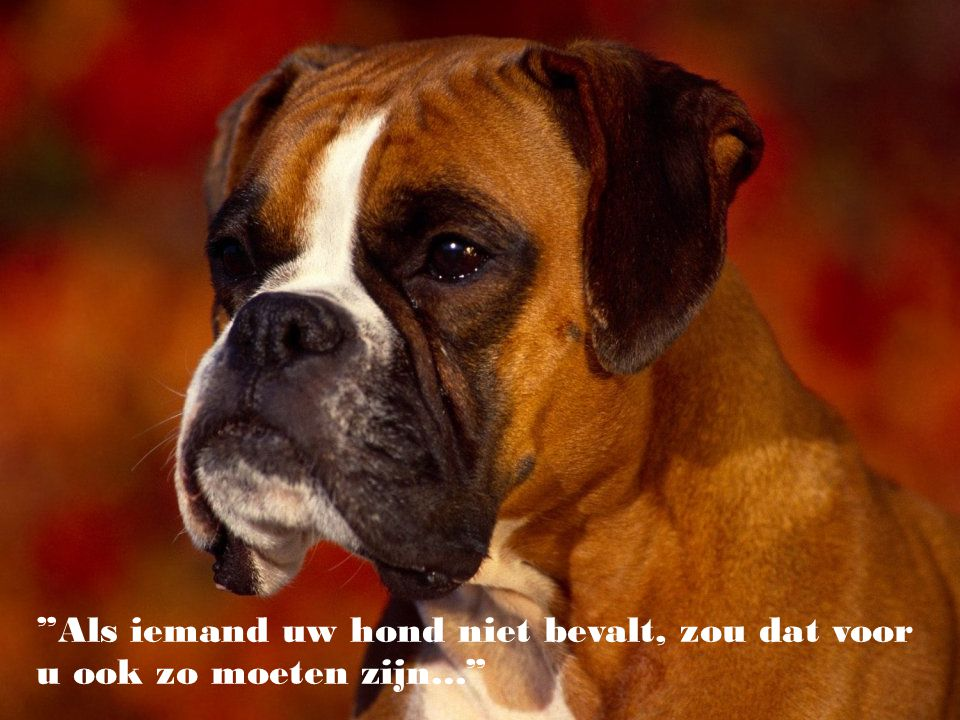 Als iemand uw hond niet bevalt, zou dat voor u ook zo moeten zijn...