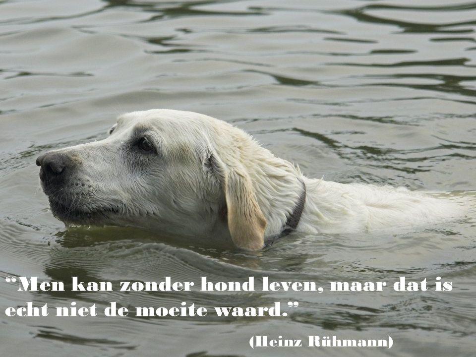 Men kan zonder hond leven, maar dat is echt niet de moeite waard.