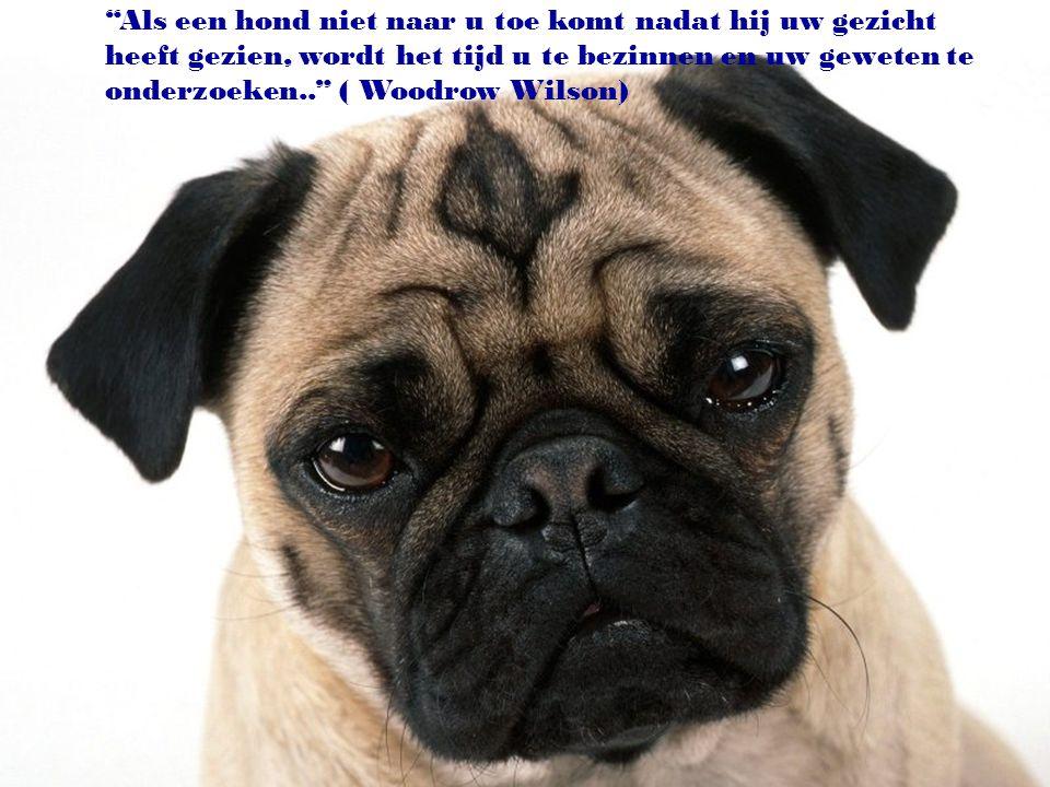 Als een hond niet naar u toe komt nadat hij uw gezicht heeft gezien, wordt het tijd u te bezinnen en uw geweten te onderzoeken.. ( Woodrow Wilson)