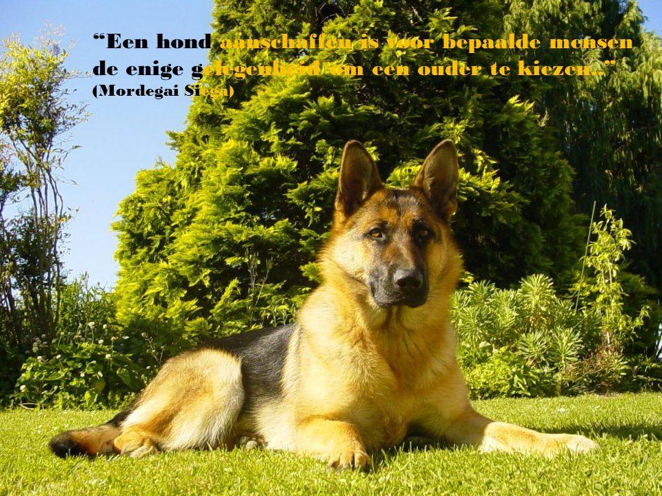 Een hond aanschaffen is voor bepaalde mensen de enige gelegenheid om een ouder te kiezen.. (Mordegai Siega)