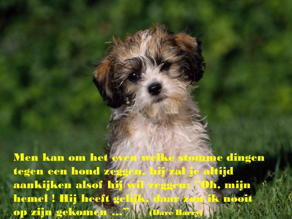 Men kan om het even welke stomme dingen tegen een hond zeggen, hij zal je altijd aankijken alsof hij wil zeggen: Oh, mijn hemel .