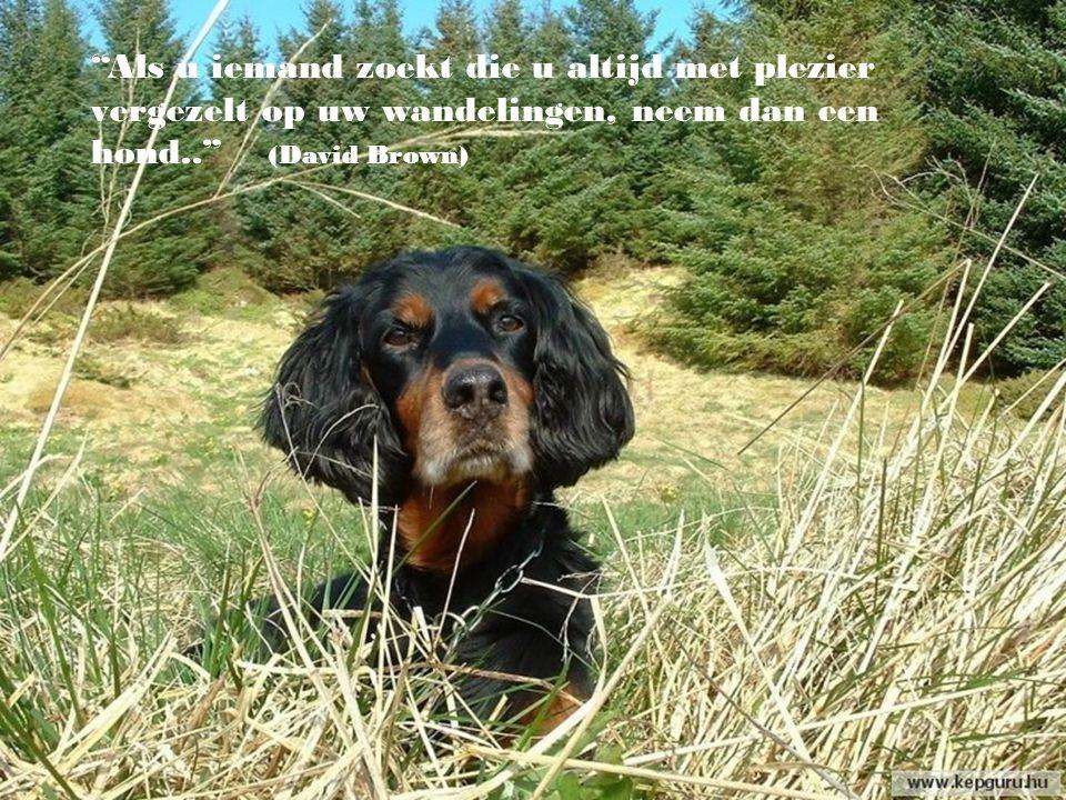 Als u iemand zoekt die u altijd met plezier vergezelt op uw wandelingen, neem dan een hond.. (David Brown)