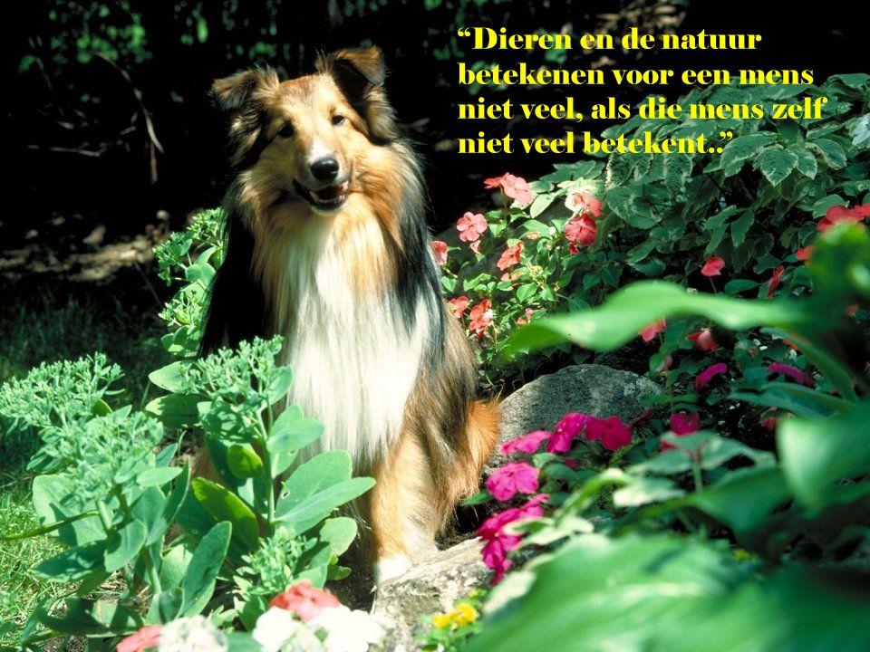 Dieren en de natuur betekenen voor een mens niet veel, als die mens zelf niet veel betekent..
