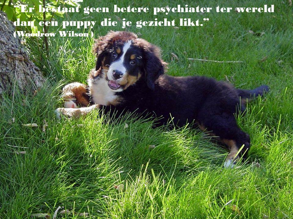 Er bestaat geen betere psychiater ter wereld dan een puppy die je gezicht likt. (Woodrow Wilson )