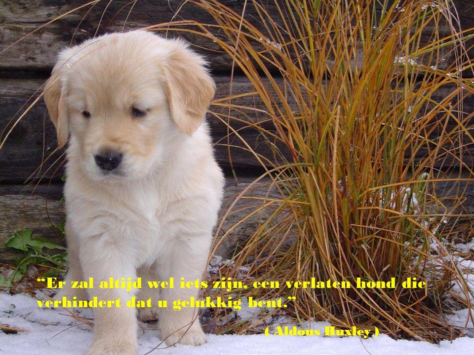 Er zal altijd wel iets zijn, een verlaten hond die verhindert dat u gelukkig bent.