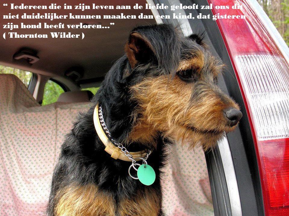 Iedereen die in zijn leven aan de liefde gelooft zal ons dit niet duidelijker kunnen maaken dan een kind, dat gisteren zijn hond heeft verloren… ( Thornton Wilder )
